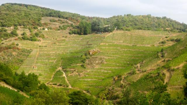Cornas-hillside1